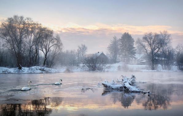 Картинка холод, зима, деревья, озеро, дома, утро, лебеди