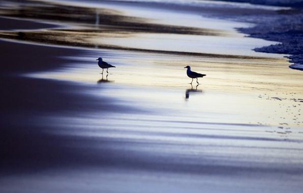 Картинка море, птицы, ночь, природа