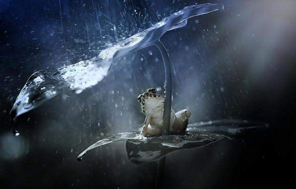 Картинка брызги, лист, дождь, лягушка