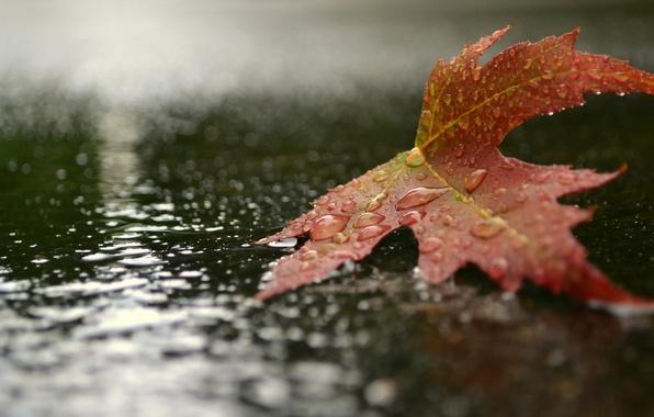 Картинка осень, капли, макро, природа, лист