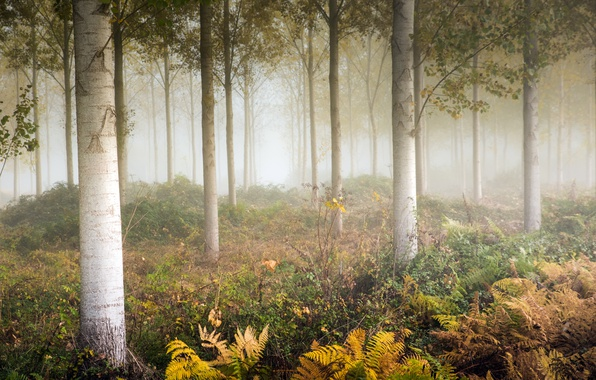 Картинка осень, туман, папоротник