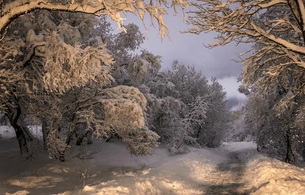 Картинка зима, дорога, лес, снег, деревья, Исландия, Iceland, Коупавогюр, Kopavogur