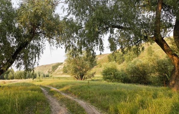 Картинка дорога, лето, деревья, пейзаж, природа