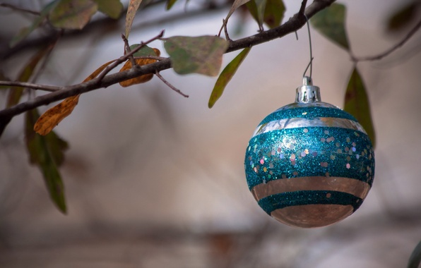 Картинка праздник, игрушка, ветка