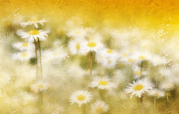 Картинка фон, цвет, ромашки