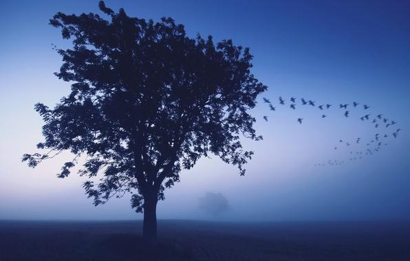 Картинка птицы, туман, дерево