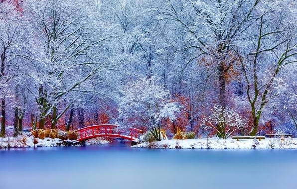 Природа пейзаж зима снег деревья