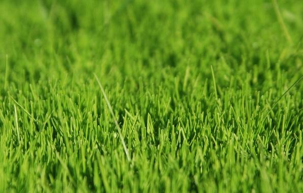 Картинка трава, зелёный, grass