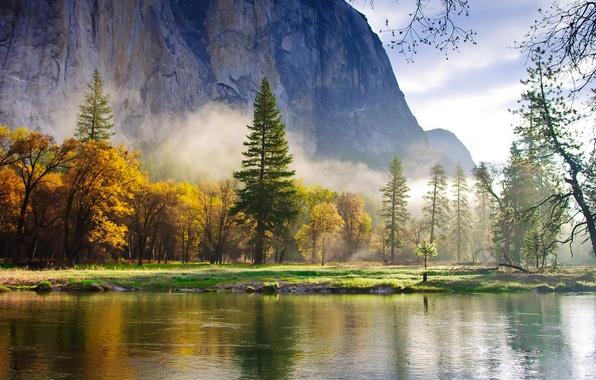 Картинка лес, горы, природа, туман, озеро, обои, утро, ели