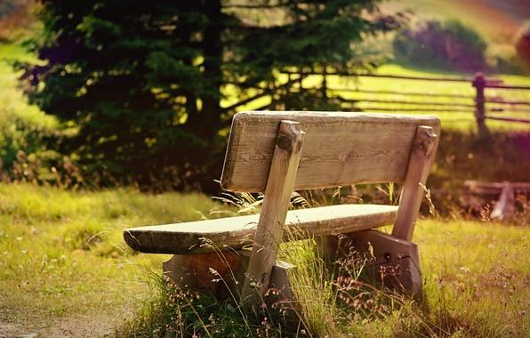 Картинка зелень, поле, трава, листья, солнце, деревья, скамейка, природа, фон, дерево, обои, настроения, ограда, ограждение, день, …