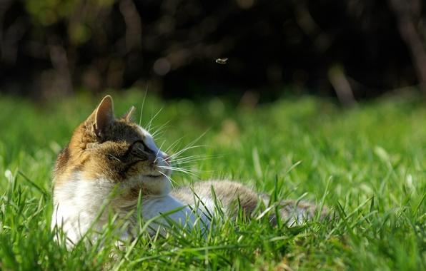 Картинка трава, кот, усы, муха, движение, отдых, весна, охота, зелёное