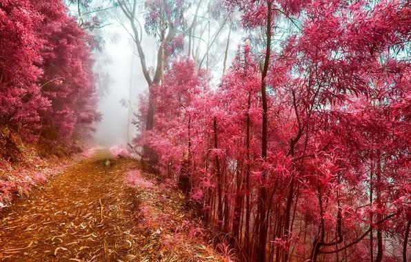 Картинка иней, осень, лес, деревья, туман, утро, тропинка