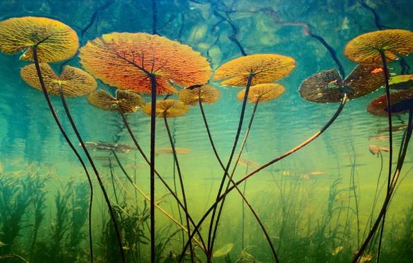 Картинка вода, водоросли, растения, глубина, подводный мир