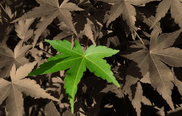 Картинка осень, лес, лист, парк, улица