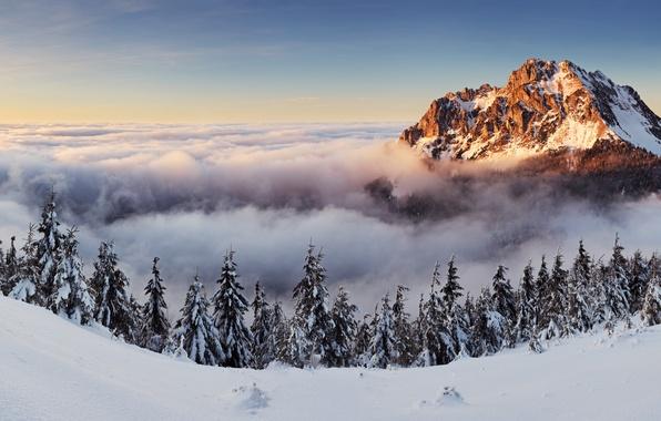 Картинка деревья, пейзаж, природа, гора, panorama, Slovakia