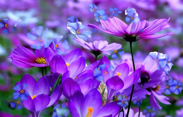 Картинка макро, линии, цветы, краски, лепестки, крокус, космея