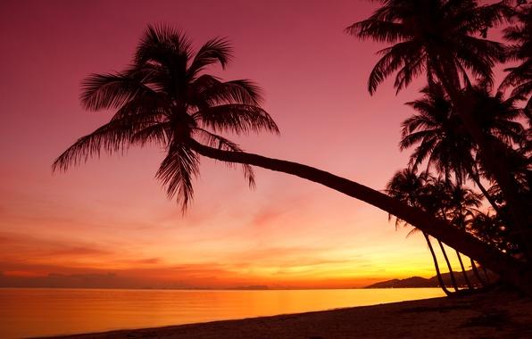 Картинка море, пляж, небо, пейзаж, закат, природа, пальмы, океан, берег, силуэт, beach, sky, sea, ocean, landscape, …