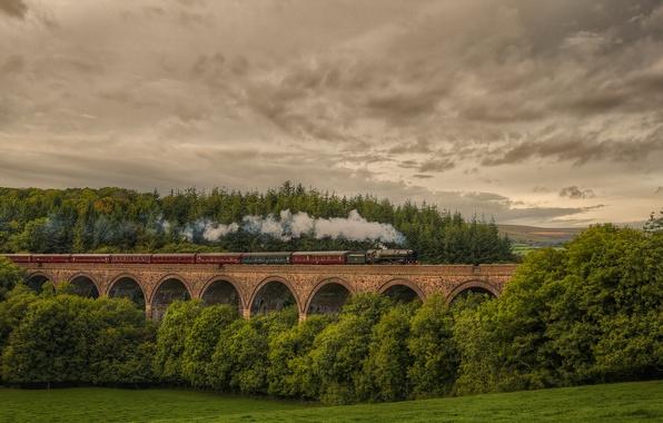 Картинка лес, природа, Англия, поезд, паровоз, железная дорога, Cornwood viaduc