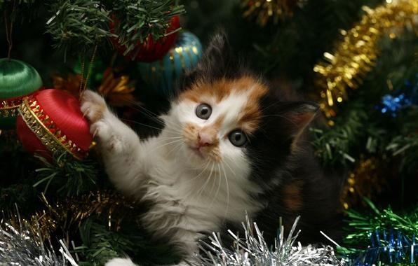 Картинка кошка, кот, котенок, праздник, елка, новый год, new year, мишура, kitten, cat