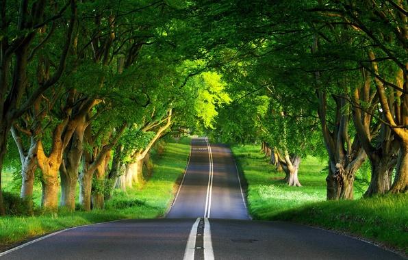 Картинка дорога, лес, лето