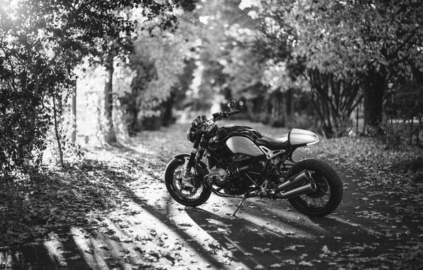 Картинка дорога, осень, листья, солнце, деревья, BMW, мотоцикл