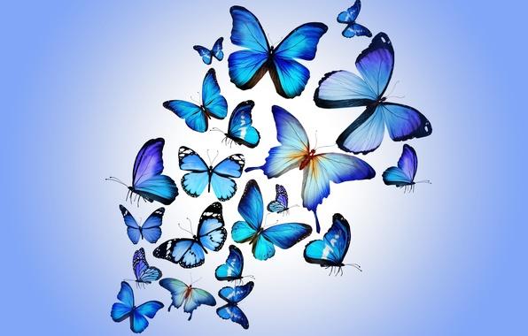 Картинка бабочки, colorful, blue, butterflies, design by Marika