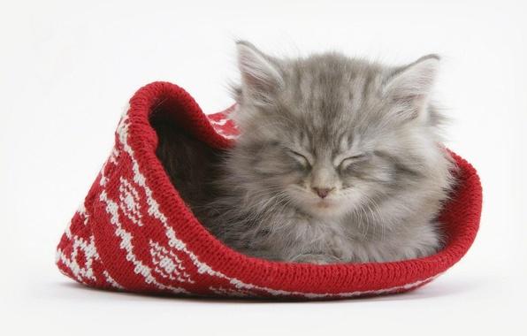 Картинка котенок, шапка, Кот, спит