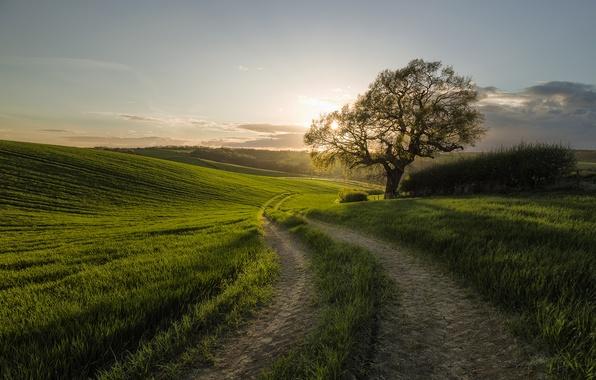 Картинка дорога, поле, утро