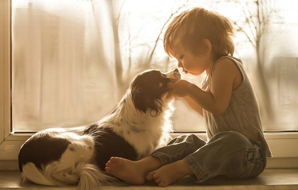 Картинка собака, мальчик, окно, друзья, на подоконнике