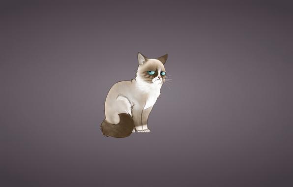 Картинка кошка, кот, минимализм, Соус Тардар, Grumpy Cat, Tardar Sauce, Сердитый Котик