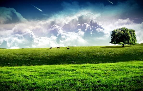 Картинка поле, облака, дерево, коровы