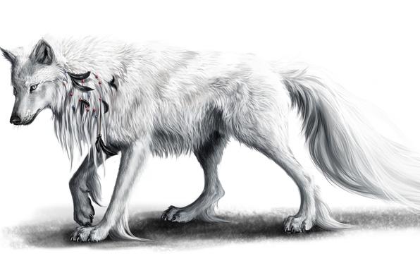 Картинка белый, перья, Волк
