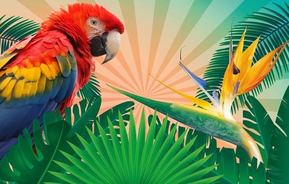 Картинка листья, ветки, тропики, рендеринг, фон, птица, вектор, перья, попугай, разноцветные