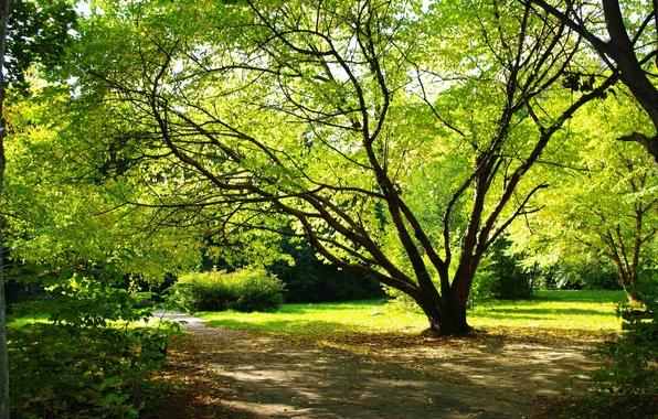 Картинка лето, листья, природа, парк, дерево, земля, романтика, растения