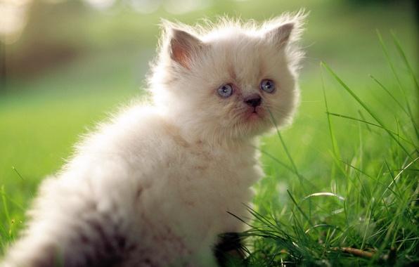 Картинка кошка, белый, трава, кот, макро, котенок, милый, cat