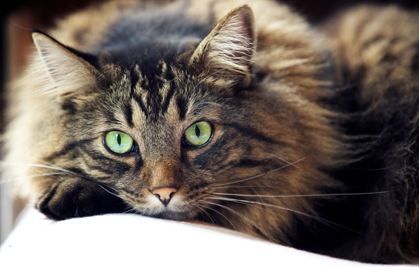Картинка глаза, кот, усы, взгляд, шерсть, смотрит