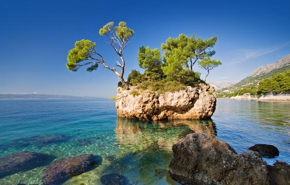 Картинка море, природа, скала, дерево, the rock, the sea, the nature, a tree