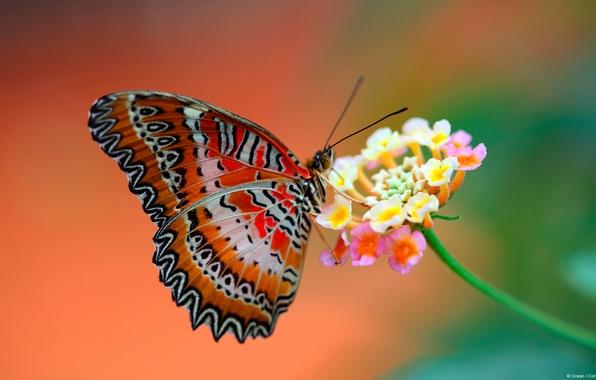 Картинка цветок, фон, бабочка, крылья