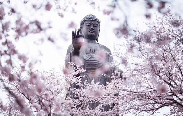 Картинка деревья, city, город, Япония, сад, сакура, статуя, Japan, цветение, statue, префектура Ибараки, Amitabha Buddha, Ibaraki …