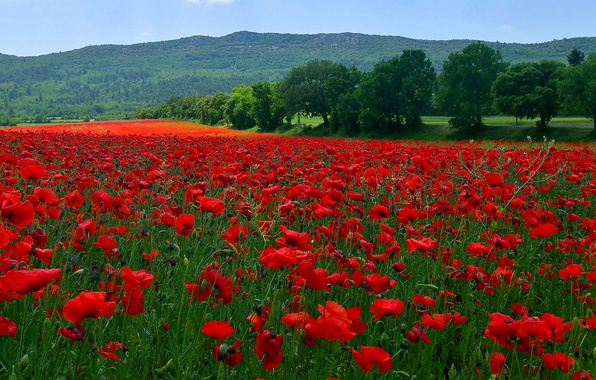 Картинка поле, трава, деревья, цветы, горы, холмы, маки, луг
