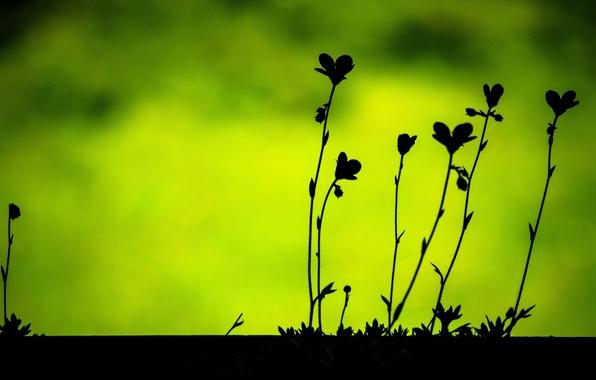 Картинка листья, макро, зеленый, фон, widescreen, обои, растительность, черный, растение, размытие, wallpaper, листочки, силуэты, широкоформатные, background, …