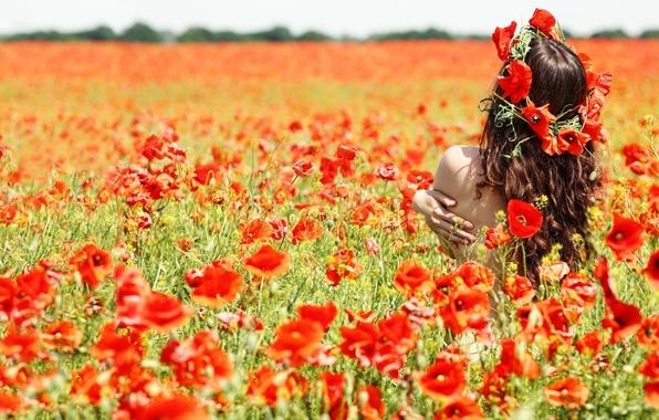 Картинка поле, девушка, маки