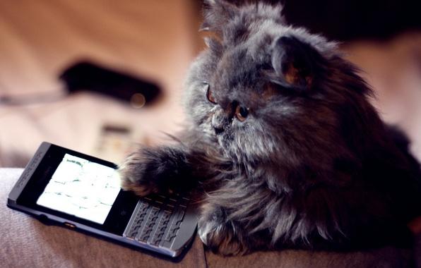 Картинки по запросу кот с телефоном картинки
