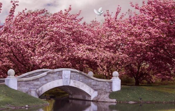 Картинка деревья, мост, парк, река, весна, сад, цветение, pink, blossom, park, spring