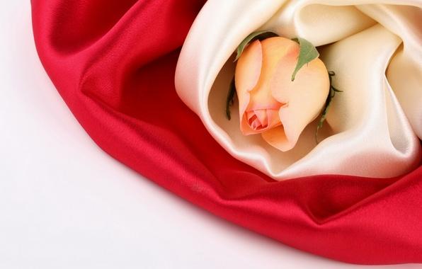 Картинка цветок, цветы, розы, шелк, бутон, ткань, шёлк