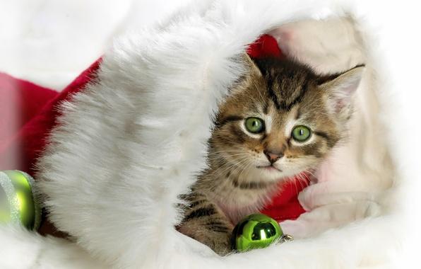 Картинка котенок, шапка, новый год