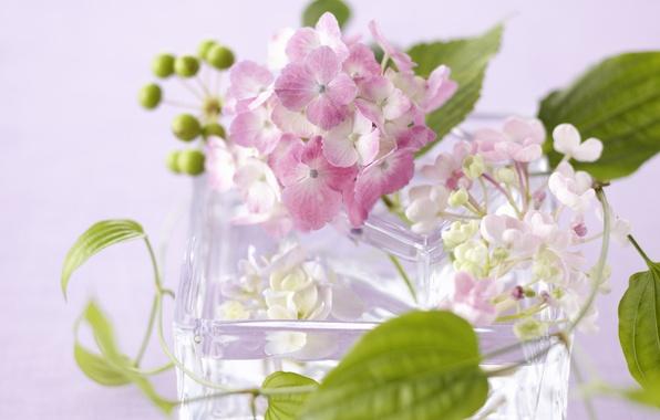 Картинка стекло, листья, цветы, лепестки, ваза