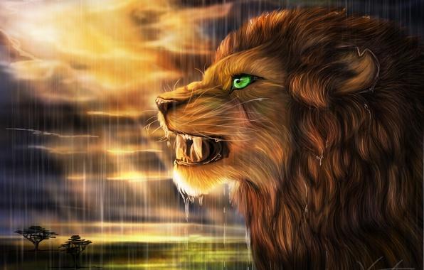 Картинка солнце, дождь, хищник, лев, арт, саванна, профиль, дикая кошка, goldenphoenix100