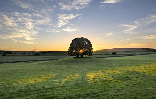 Картинка восход, дерево, рассвет, Англия, утро, луг, England, Bell Busk