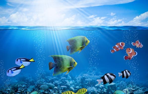Картинка солнце, лучи, рыбки, пузыри, подводный мир, underwater, ocean, fishes, tropical, reef, coral, коралловый риф